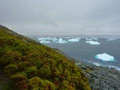 AntarcticGreen